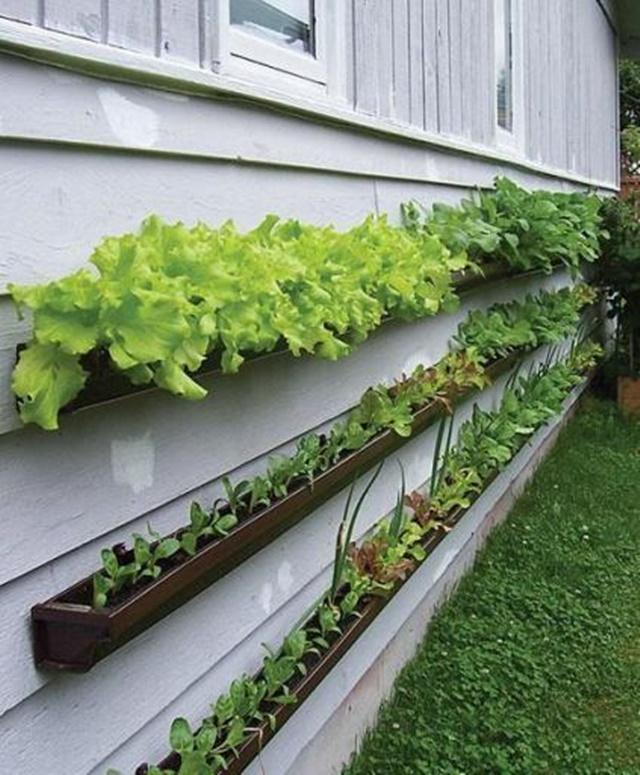 Rain Gutter Vegetable Garden Tutorial - DIY Space Saving Vertical #Garden Projects Picture #Instructions