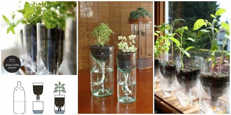 Diy Self Watering Seed Starter Pot Planter