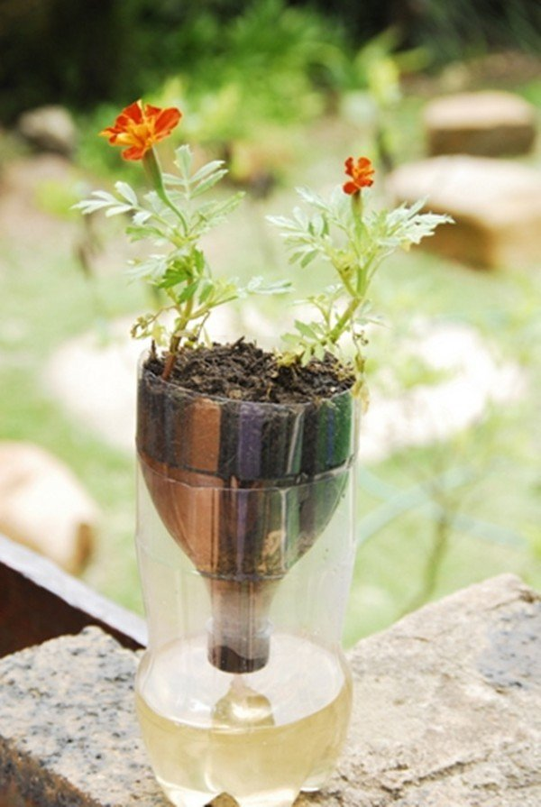 Diy Self Watering Seed Starter Pot Planter