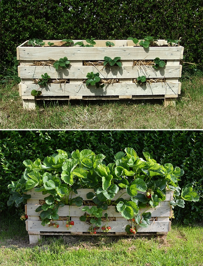Vertical Strawberry Planter From A Pallet-Pallet Gardening Ideas