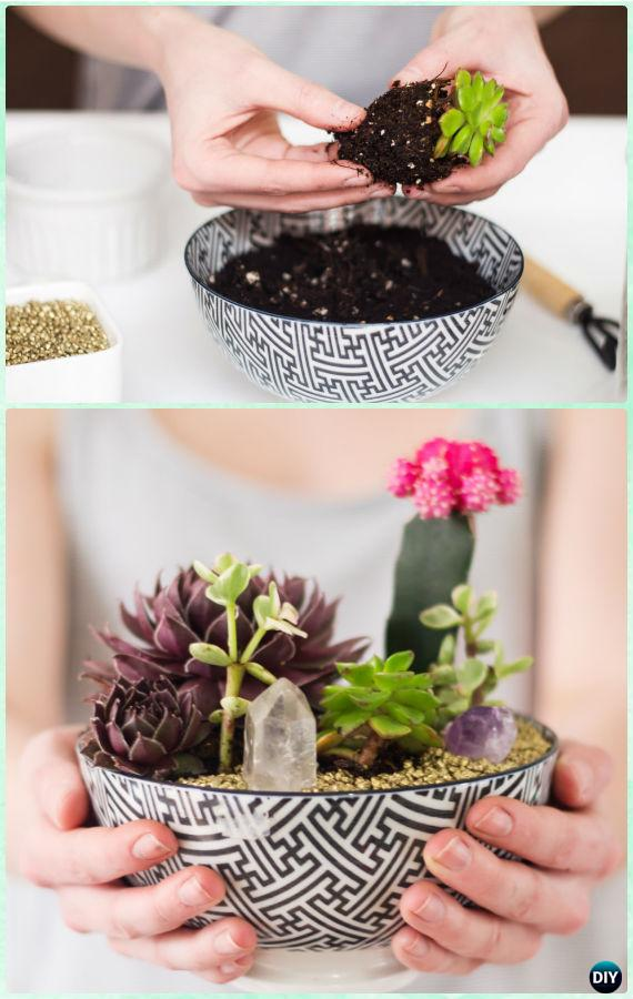 DIY Bowl Succulent Garden Instruction- DIY Indoor Succulent Garden Ideas Projects