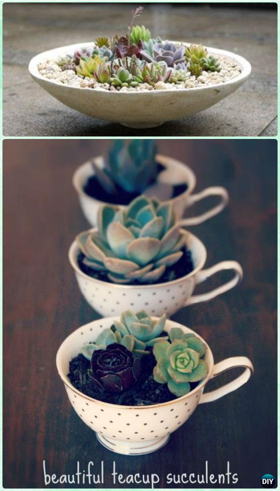 Diy indoor outdoor succulent garden ideas projects diy teacup succulent garden instruction diy indoor succulent garden ideas projects sisterspd
