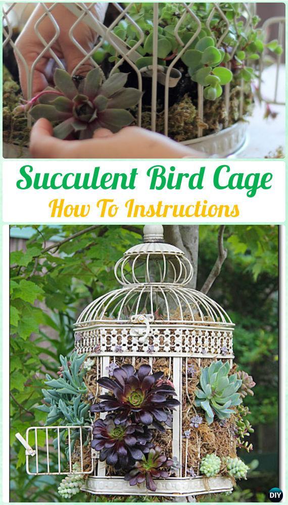 DIY SucculentBirdCage Instruction- DIY Indoor Succulent Garden Ideas Projects