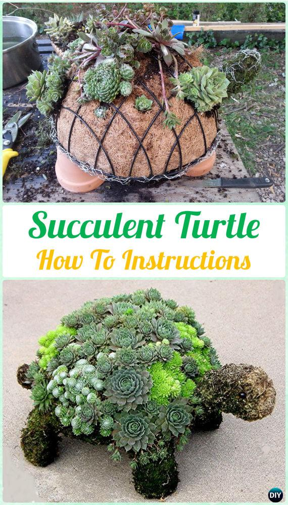 DIY Succulent Turtle Topiary Instruction  DIY Indoor Succulent Garden Ideas  Projects