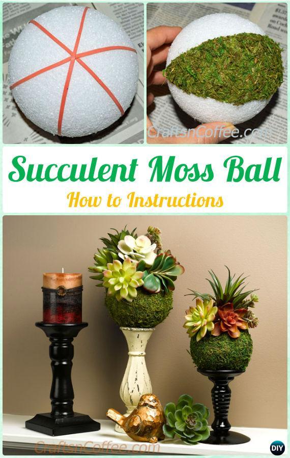 DIY Succulent Moss Ball Display Instruction- DIY Indoor Succulent Garden Ideas Projects