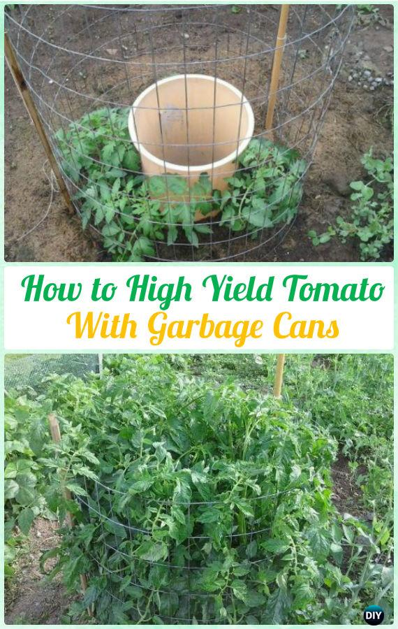 High Yield Tomato Harvest with Garbage Can Instructions - Gardening Tips to Grow Tomatoes In Containers