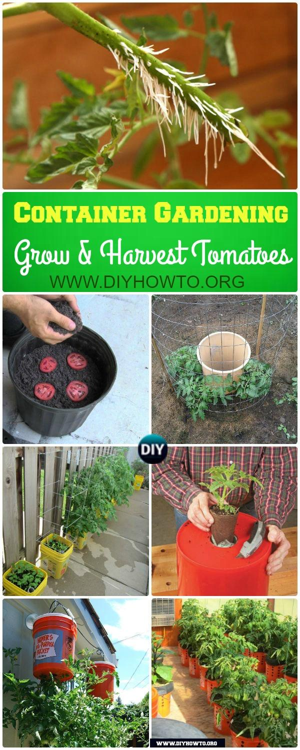 Gardening Tips to Grow Tomatoes In Containers: How to Grow and Harvest Tomato in Container Gardening