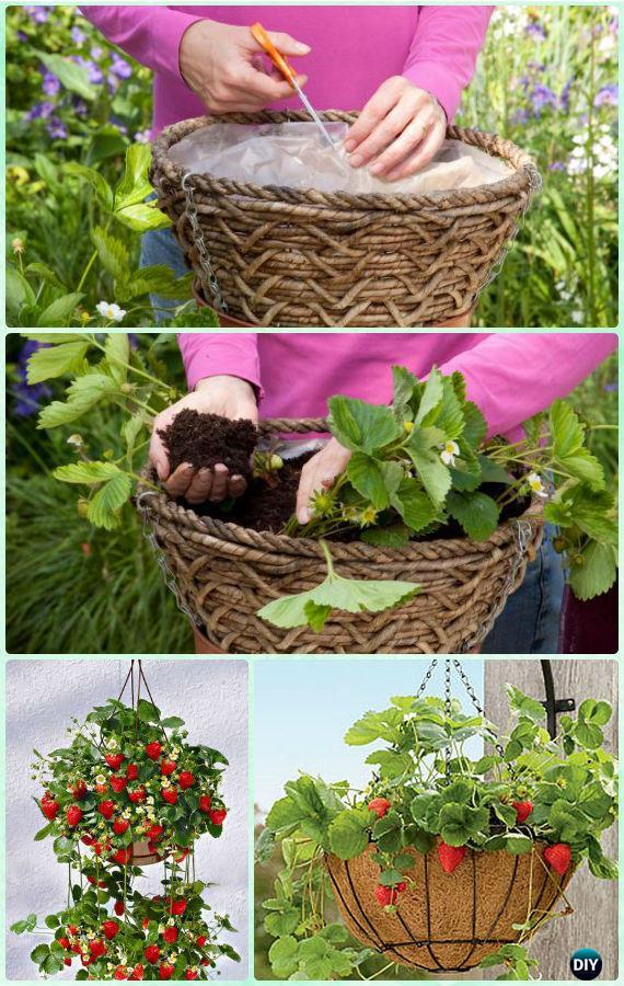 DIY Hanging Strawberry Basket Instruction-Gardening Tips to Grow Vertical Strawberries Gardens