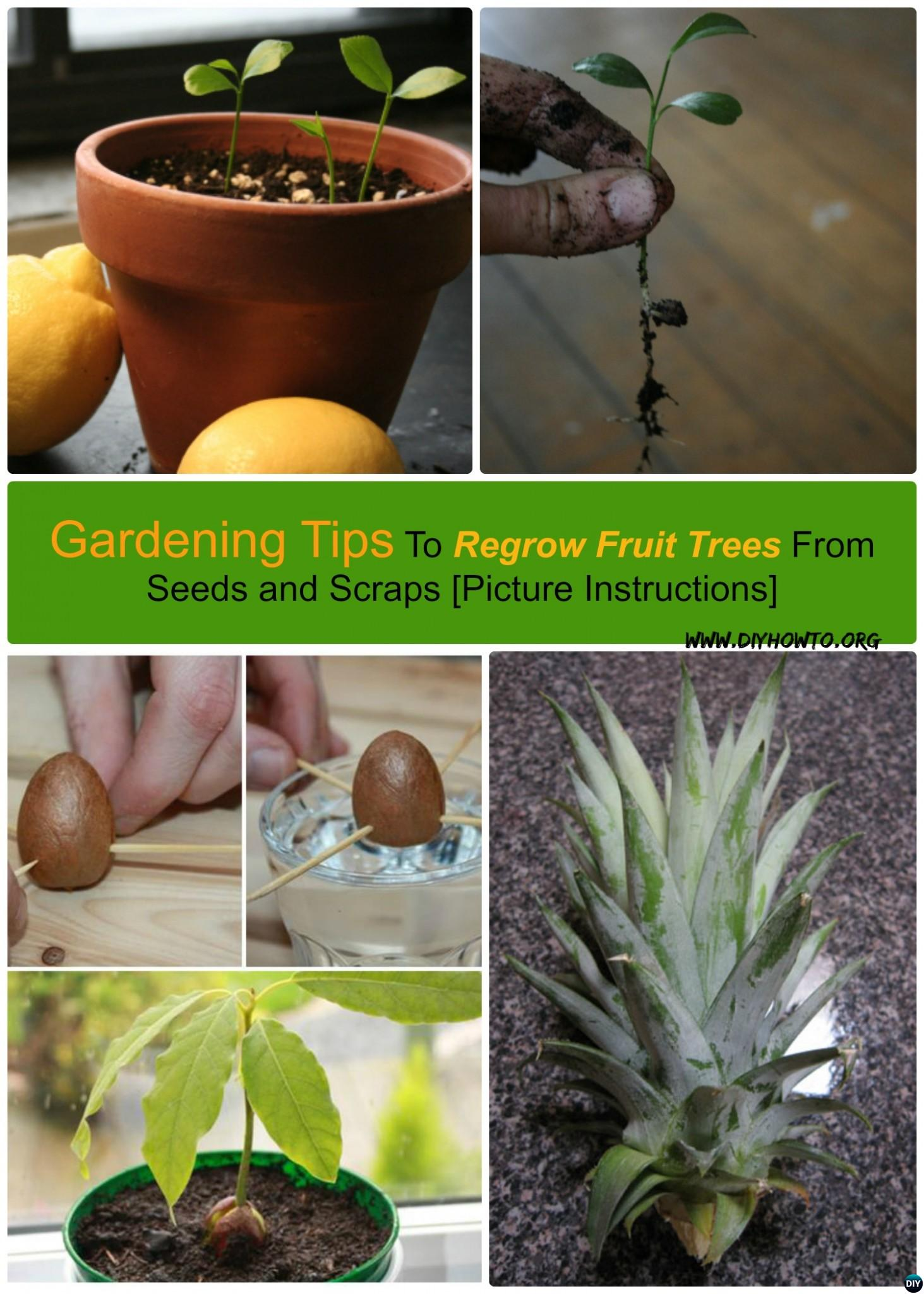 Tips to regrow fruit trees from seeds and scraps yourself for Grow your own avocado tree from seed