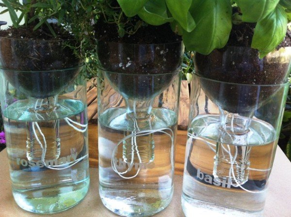 DIY Self-Watering Seed Starter Pot Planter