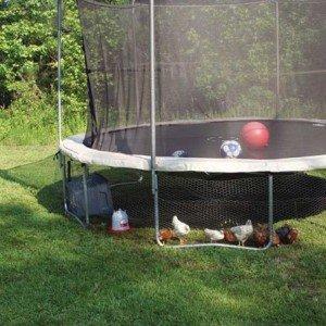 DIY Trampoline Chicken Coop Instructions