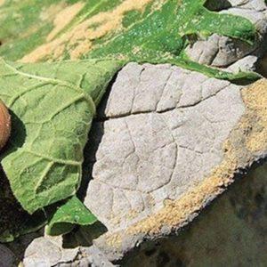 DIY Concrete Sand Cast Birdbath Instruction-DIY Big Rhubarb Leaf Garden Projects